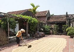 Mùa gặt tại Làng cổ ở Đường Lâm