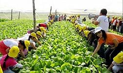 làng Việt cổ nông nghiệp Đường Lâm - Sơn Tây. Mô hình du lịch nông nghiệp kiểu mới