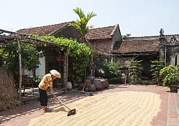 Mùa Gặt Tại Làng Cổ Đường Lâm